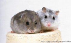关于老鼠的14件趣事
